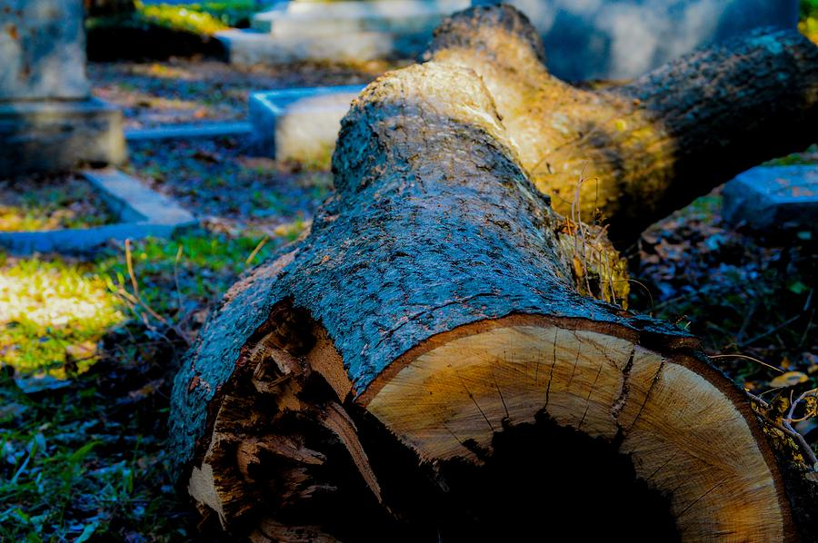 Log Photograph - The Lonely Log by Angela Sherrer