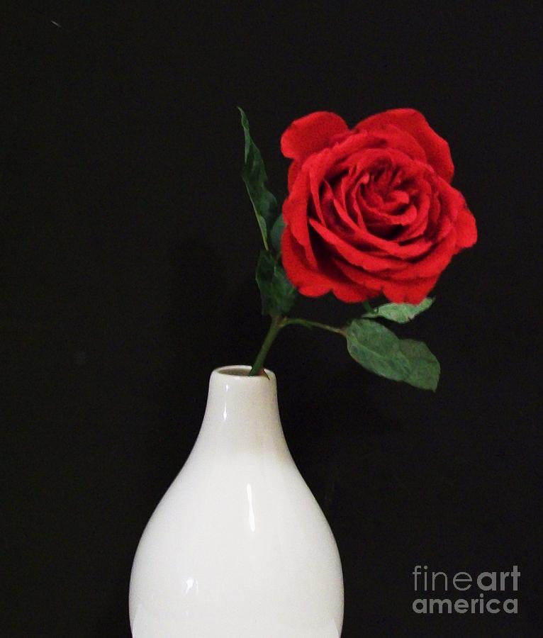 Red Rose On Black Photograph - The Lonely Red Rose by Marsha Heiken