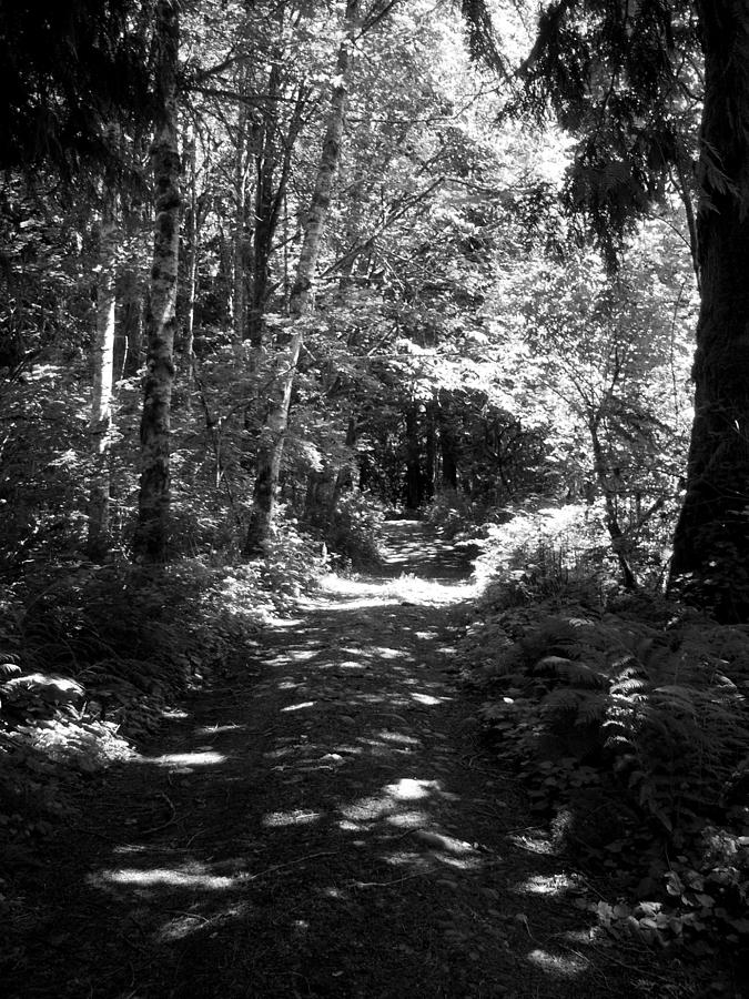 Trees Photograph - The Long And Winding Road  Bw by Ken Day