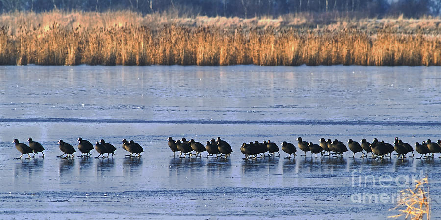 Birds Photograph - The Long March by Wedigo Ferchland