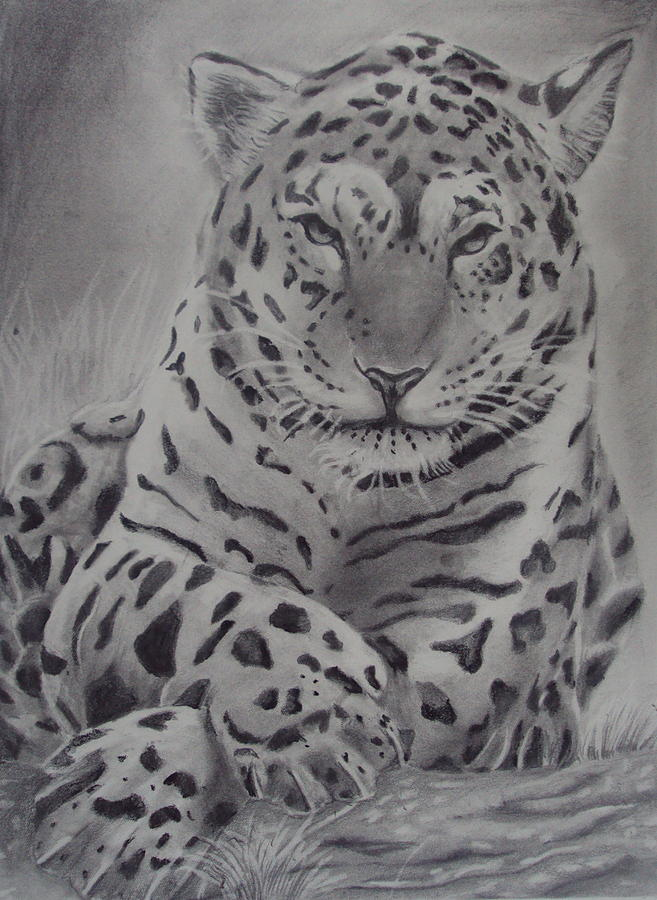 Big Cat Drawing - The Look  by Jose  Lopez