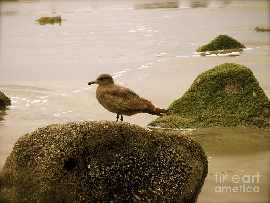 Ocean Photograph - The Lookout by Amy Strong