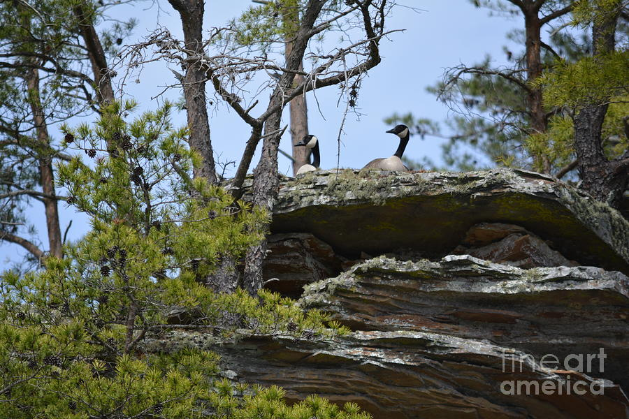 The Lookouts by Barb Dalton