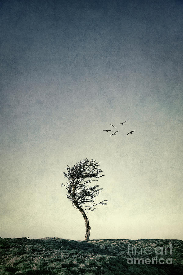 The Lure Of Solitude Photograph