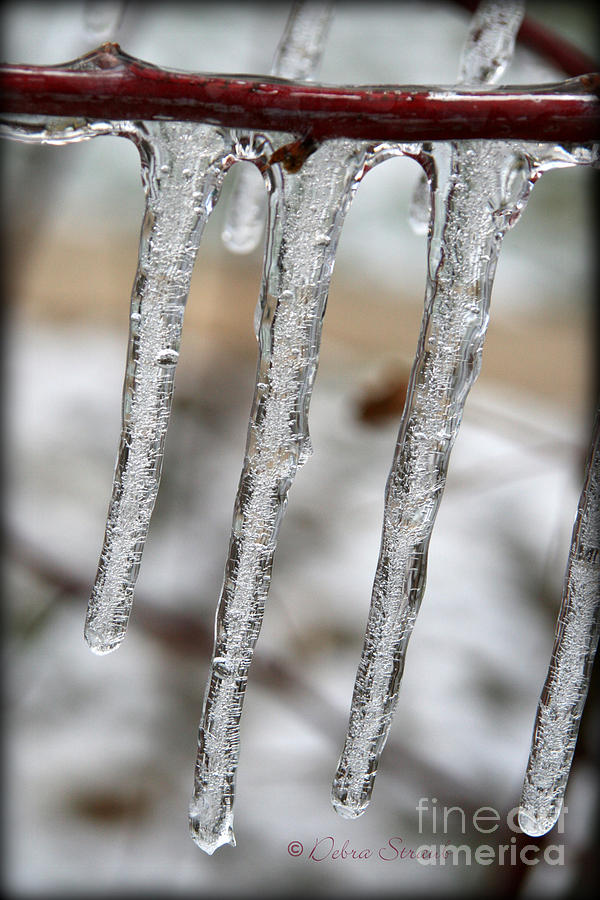 Ice Photograph - The Makings Of Winter by Debra Straub