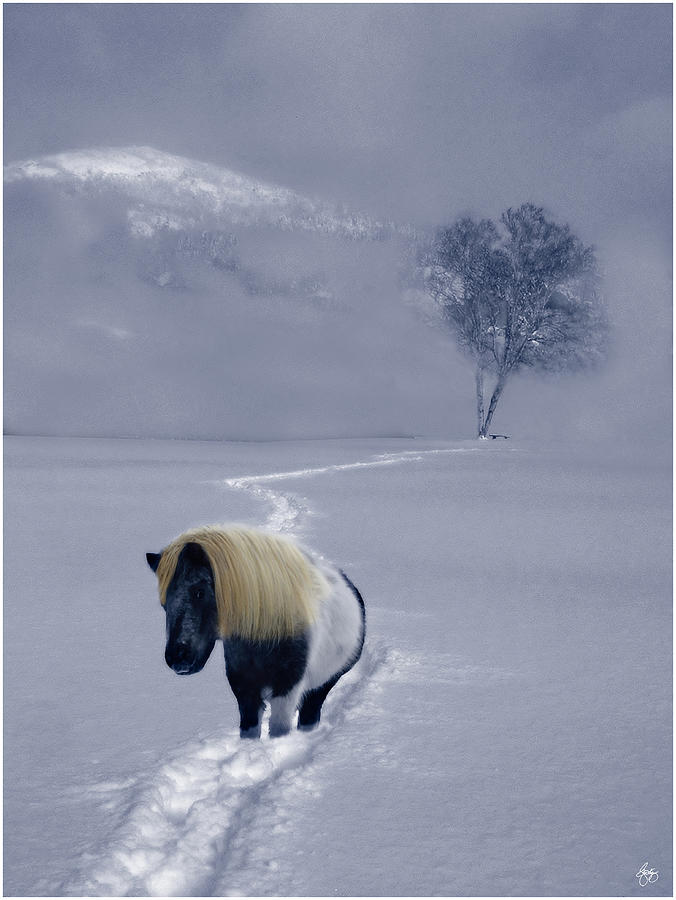 Birch Photograph - The Mane And The Mountain by Wayne King