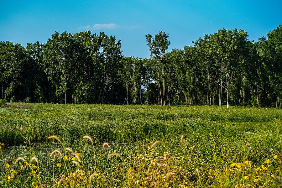 The Marsh Photograph