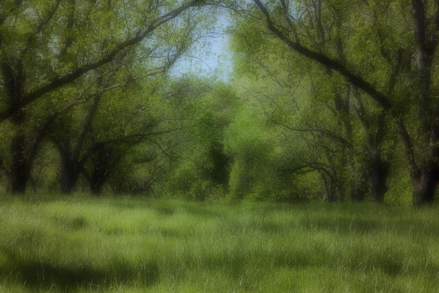 Landscape Photograph - The Meadow by Ayesha  Lakes