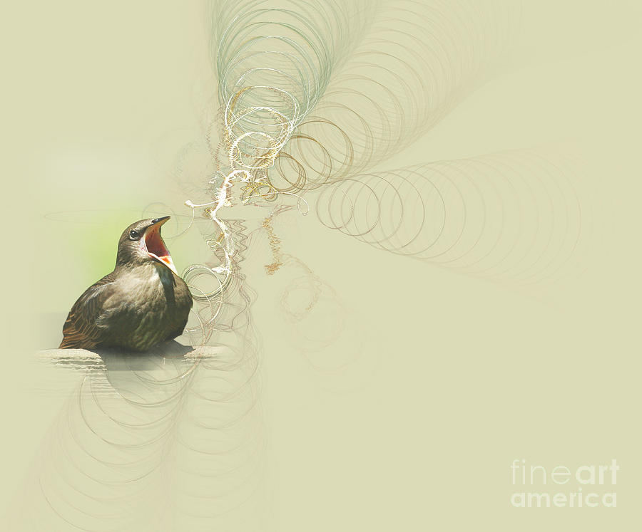 Blackbird Photograph - The Mechanical Energy Of Sound by Jan Piller