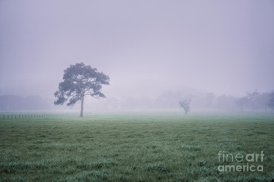 The Mist Settles by Ray Warren