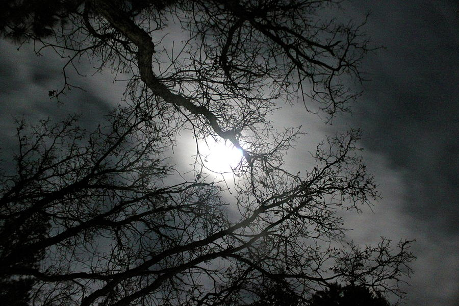 Moon Photograph - The Moon Prevails  by Angie Wingerd