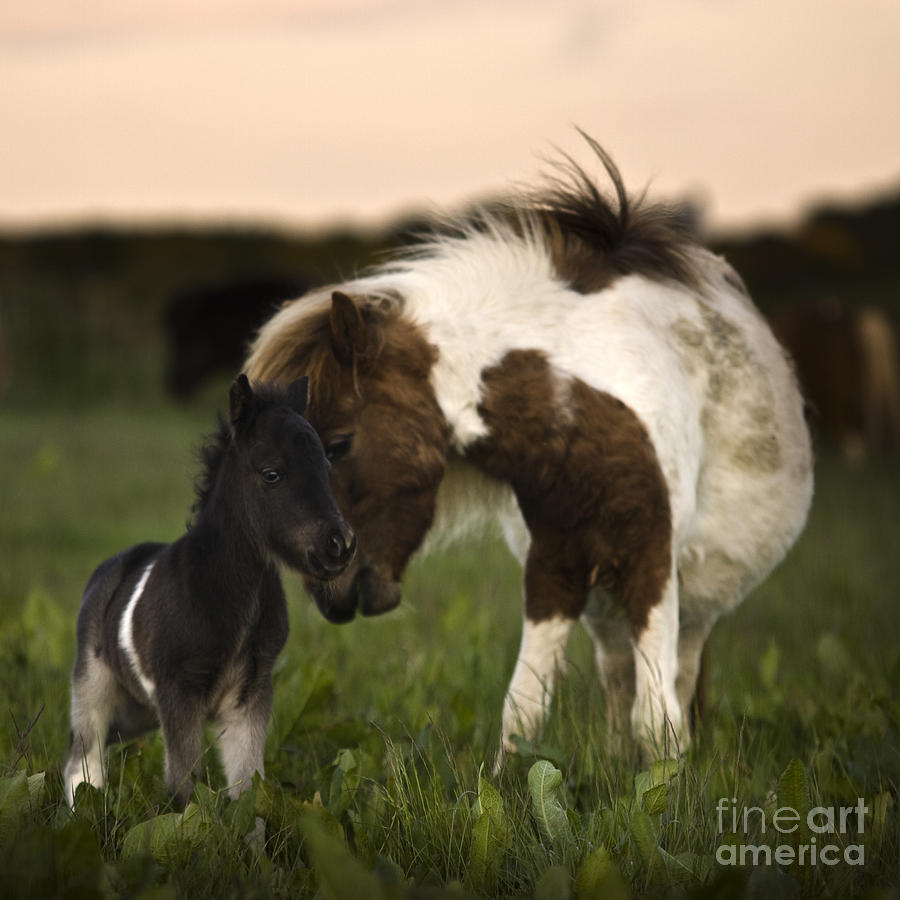 Horse Photograph - The Mothers Love by Angel Ciesniarska