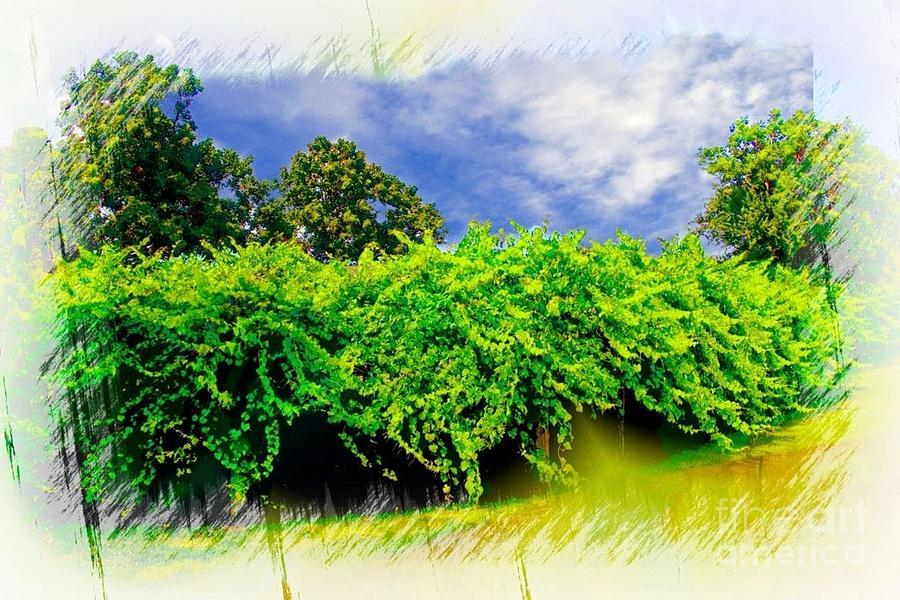 Roanoke Island Photograph - The Mother Vine - Roanoke Island, Nc by Ed Sanseverino Photography