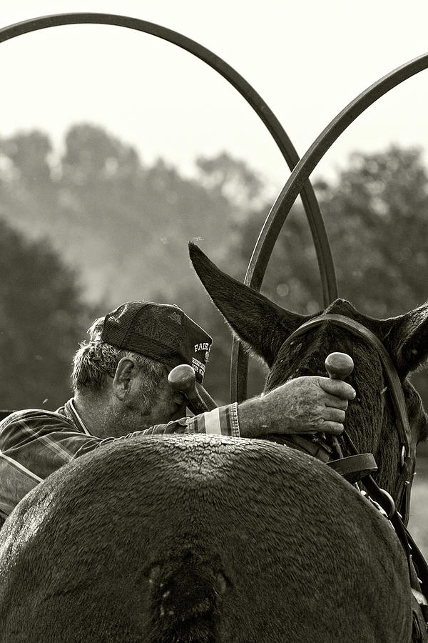 Mule Photograph - The Mule Man by Ron  McGinnis