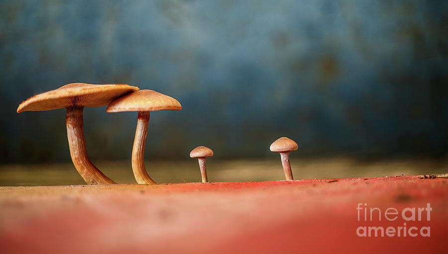 The Mushrooms Photograph
