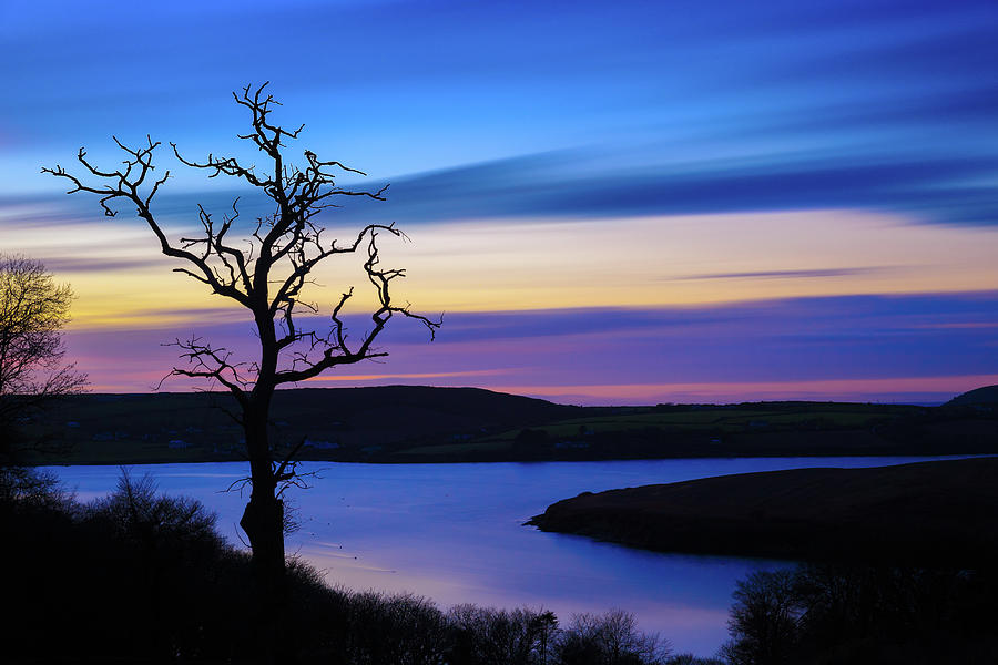The Naked Tree at Sunrise by Semmick Photo