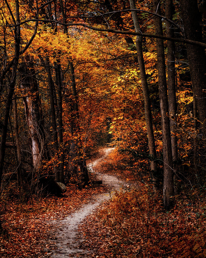 Landscape Photograph - The Narrow Path by Scott Norris