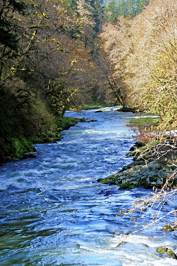 Oregon Photograph - The Nestucca River by Margaret Hood
