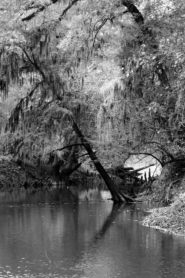 Black And White Photograph - The Neuse by Lisa Stanley