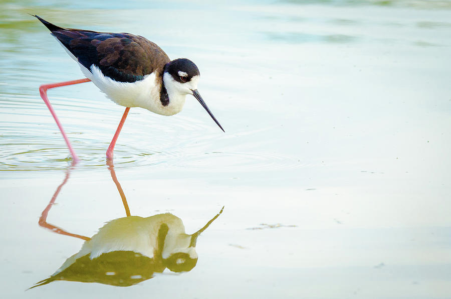 Bird Photograph - The Next Step by Emily Bristor