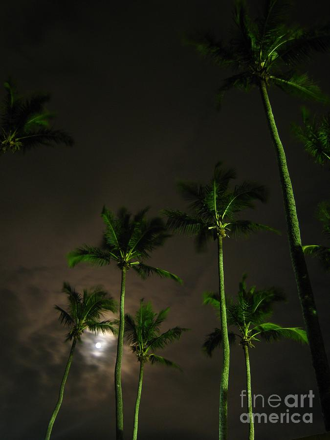 Palm Trees Photograph - The Night The Fullest Moon I by Alejandro Mahias