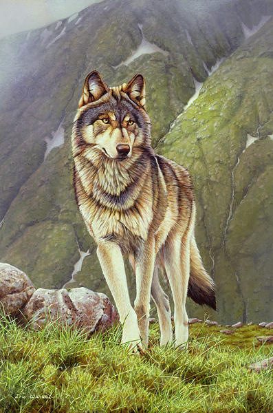 Wolf Painting - The Nomad. by Eric Wilson