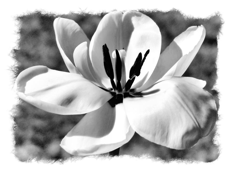 Black And White Photograph - The Notecard by Karen Scovill
