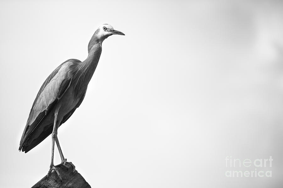Bird Photograph - The observent by Pierre GAY