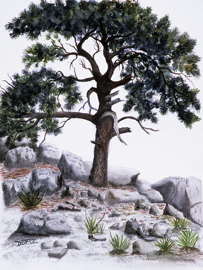 Watercolor Painting - The Offering Tree by Tom Dorsz