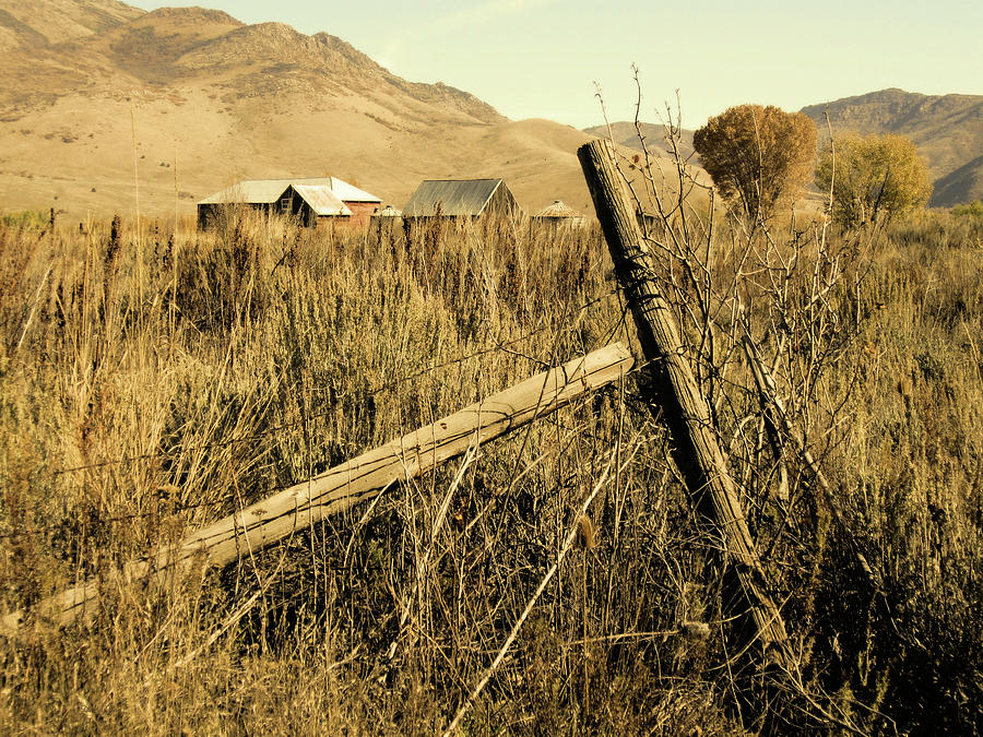 The Old Fence Post Photograph By David King