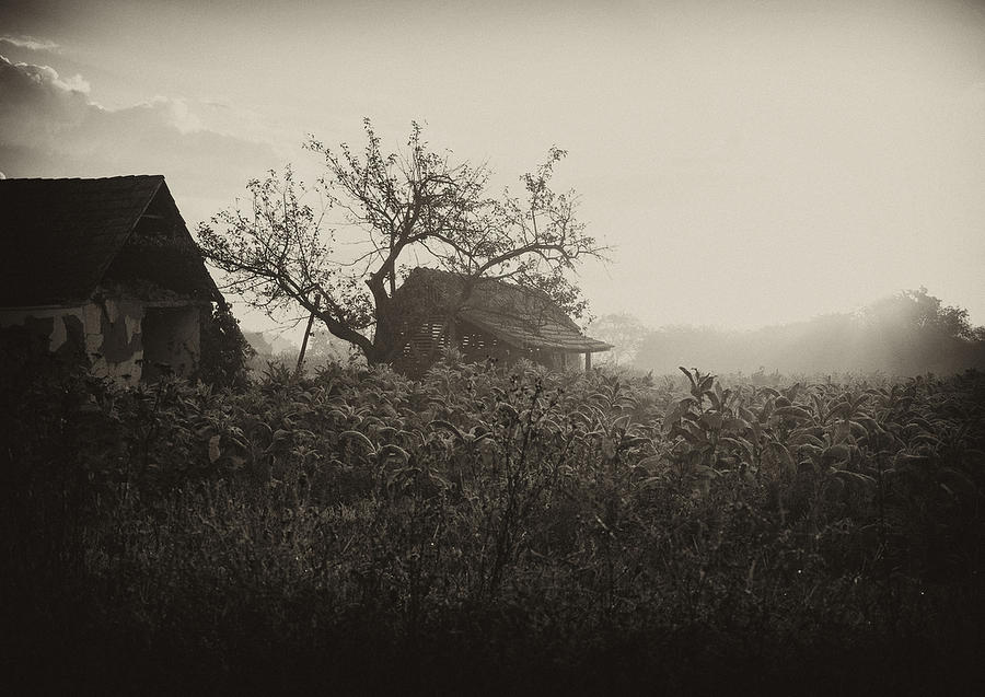 House Photograph - The Old House by Svetlana Peric