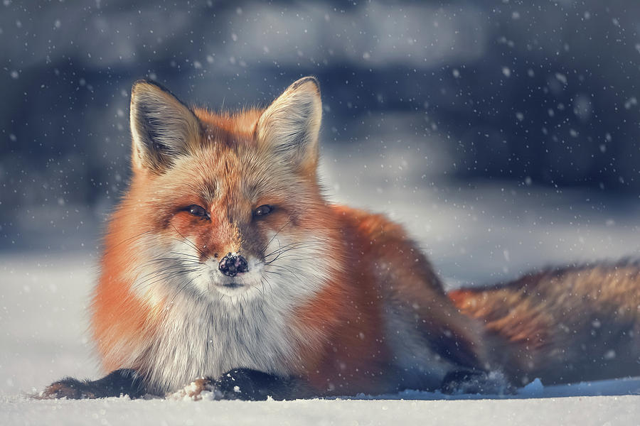 The Old Man in the Snow by Tracy Munson