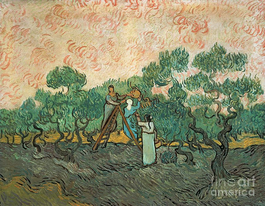 The Painting - The Olive Pickers by Vincent van Gogh