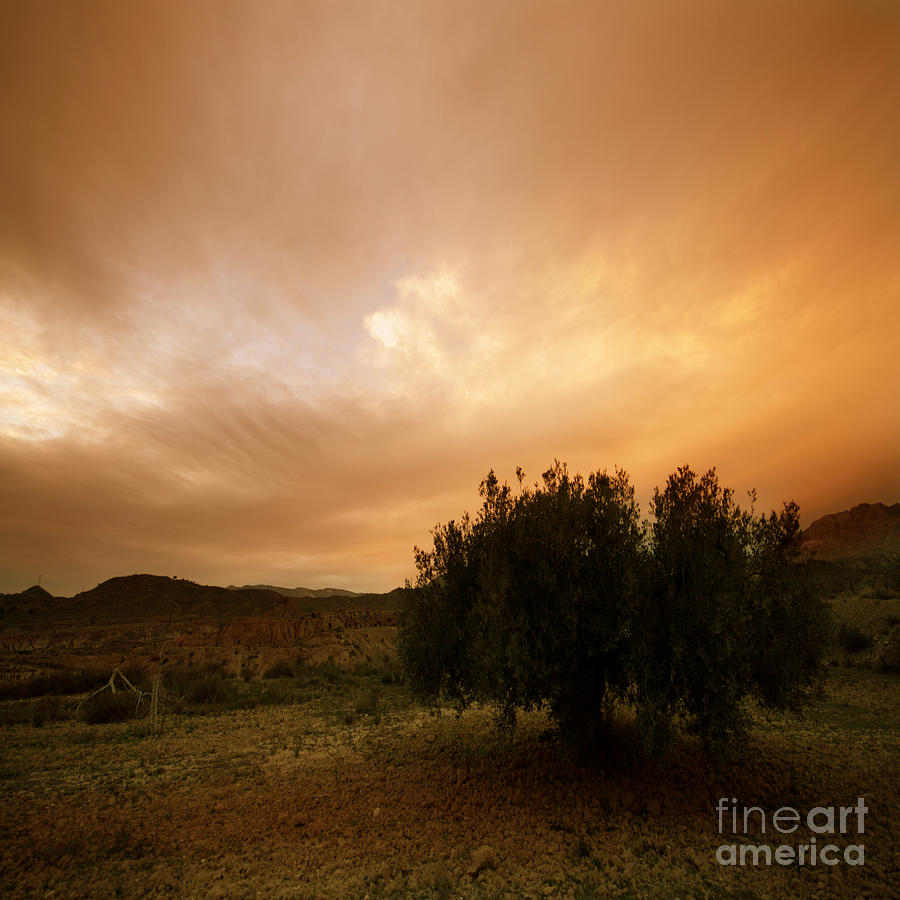 Mountains Photograph - The Olive Tree by Angel  Tarantella