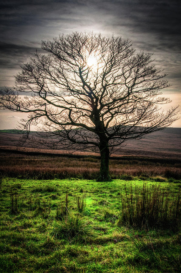The One Tree by Geoff Smith