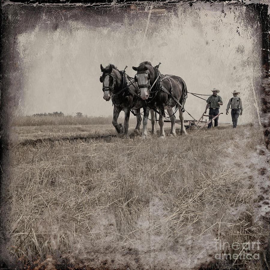 Brad Allen Photograph - The Original Horsepower by Brad Allen Fine Art