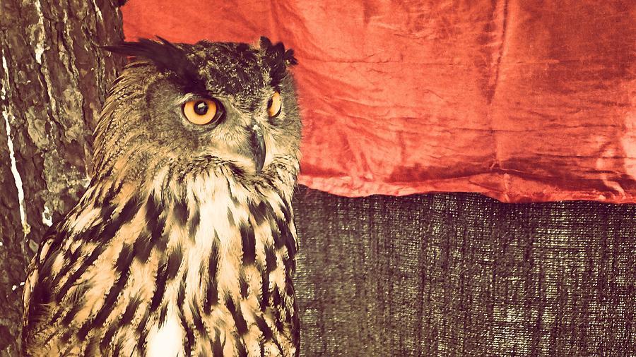 Owl Photograph - The Owl by Pedro Venancio