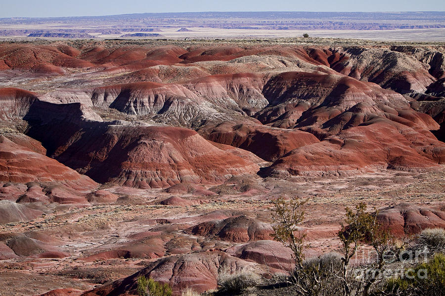Arizona Photograph - The Painted Desert  8062 by James BO  Insogna