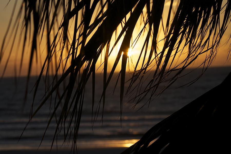 Sunset Photograph - The Palm Tree In The Sunset by Danielle Allard