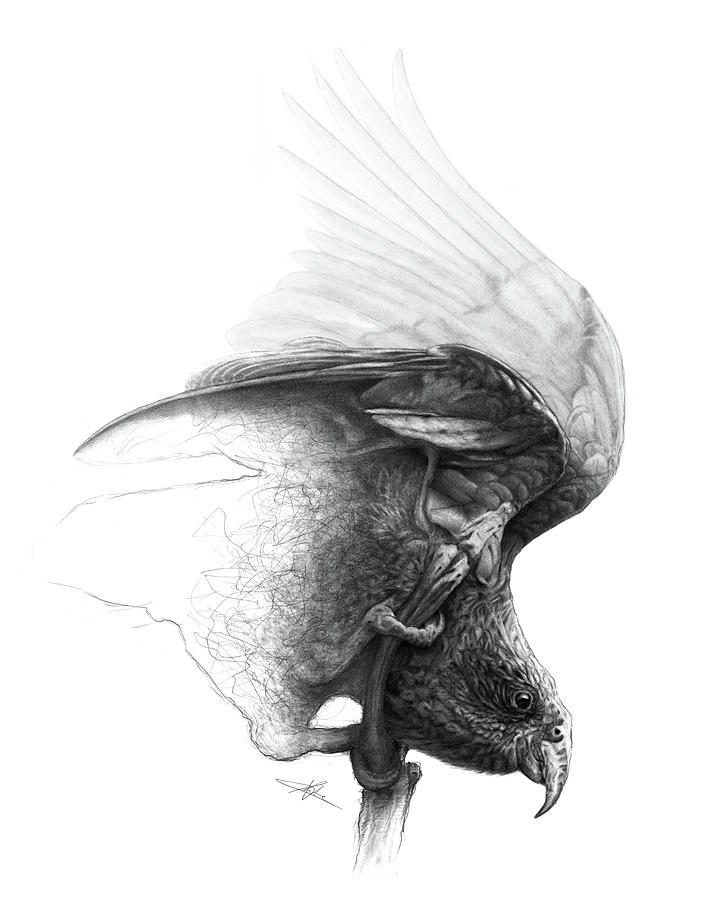 Parrot Drawing - The Parrot by Christian Klute
