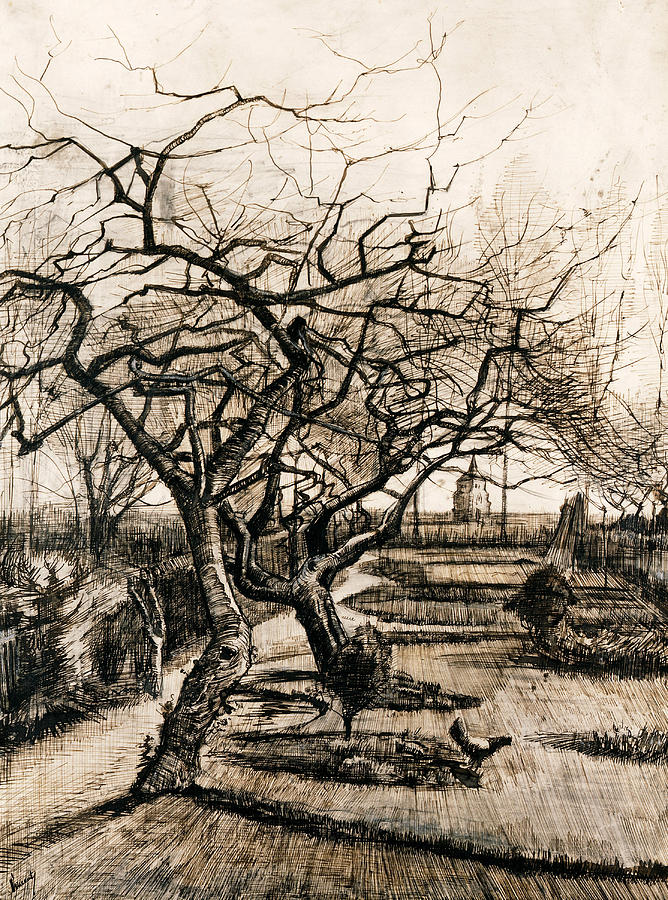 Van Gogh Drawing - The Parsonage Garden At Nuenen In Winter by Vincent van Gogh