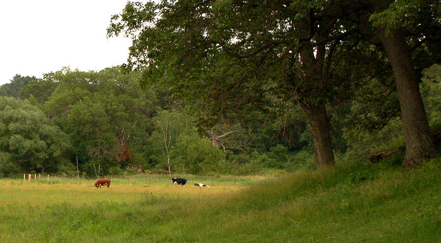 Field Photograph - The Pasture by Lisa Patti Konkol