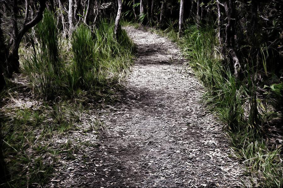 The Path 11 By Kristalin Davis Photograph