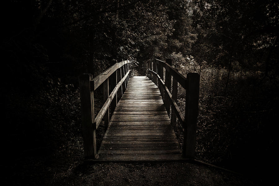The Path Between Darkness And Light Photograph