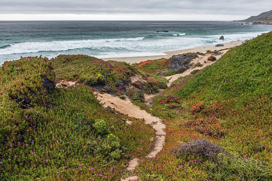 The Path by Chuck Jason