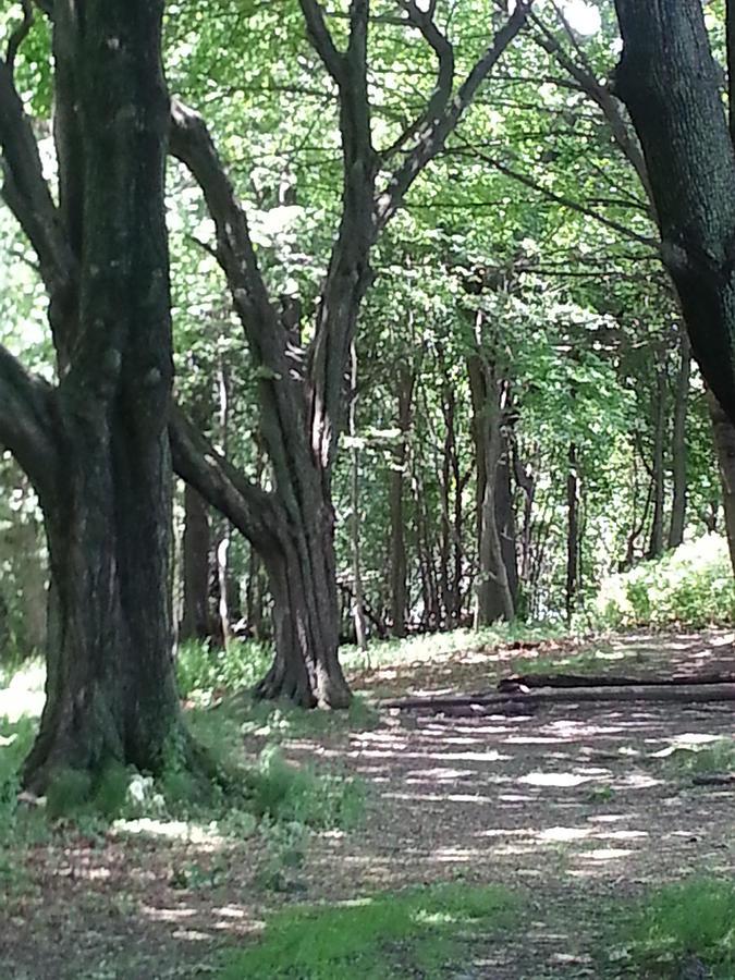 The Path Photograph