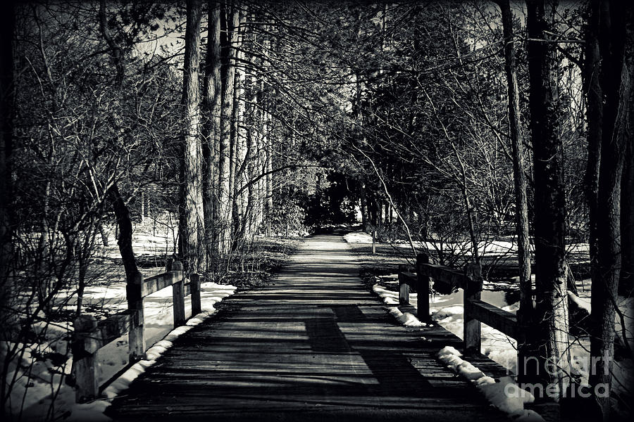 Trees Photograph - The Path by Elizabeth Babler