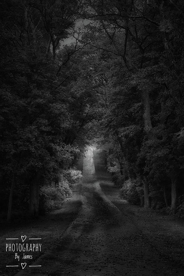 The Path Photograph by James Caine