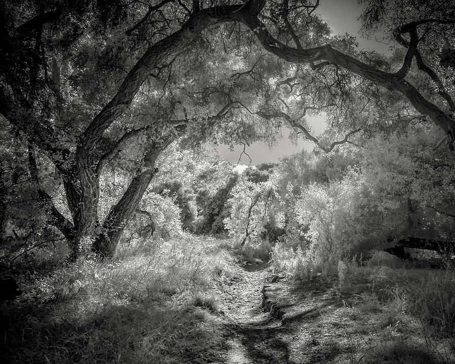 Rancho Penasquitos Photograph - The Path by Joseph Smith
