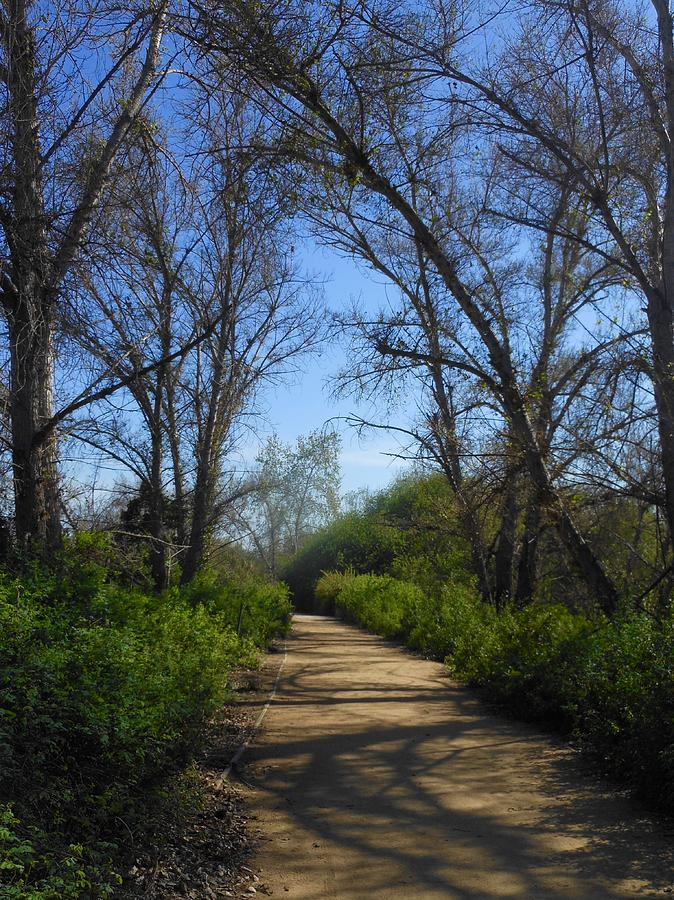 The Path Less Traveled by My Lens and Eye - Judy Mullan -